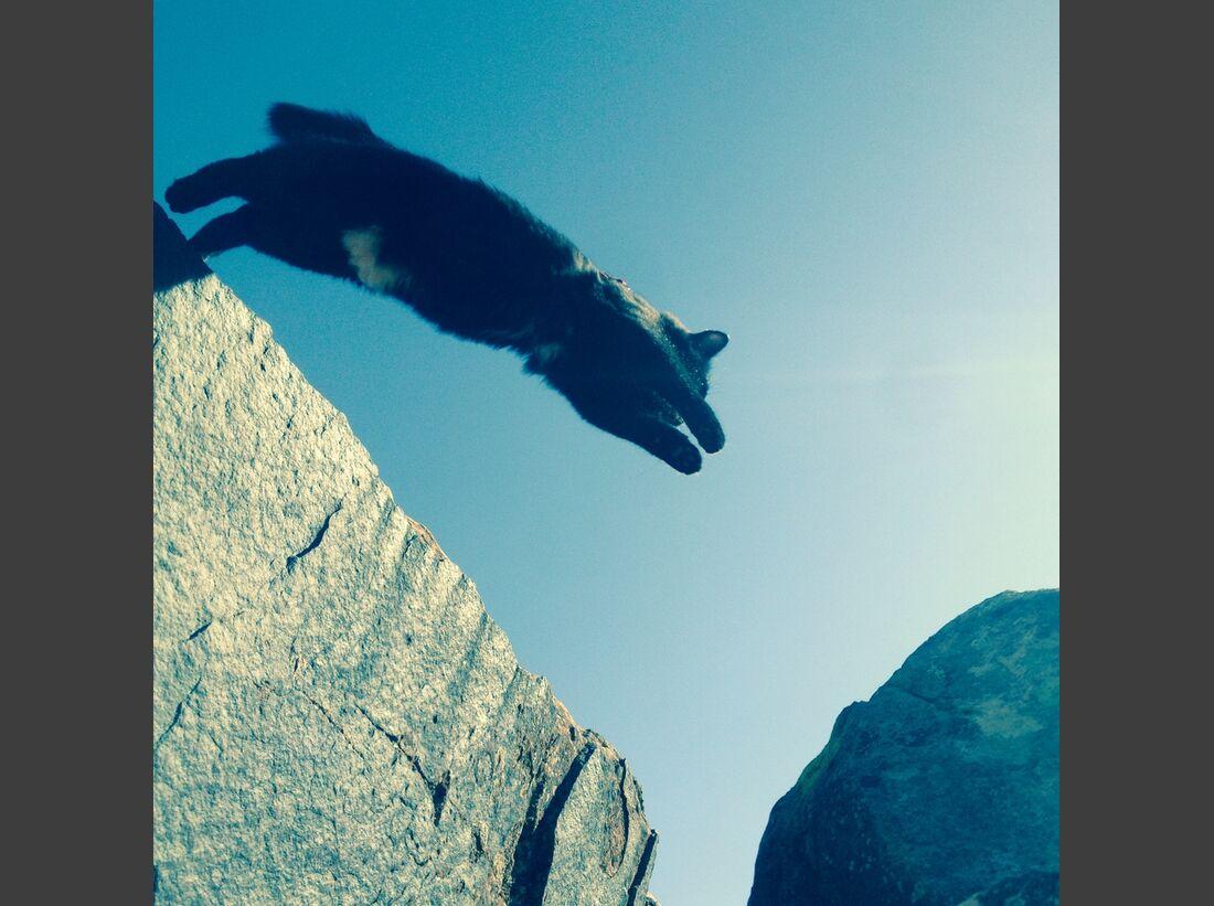 kl-craig+millie-kletternde-katze-jumping-canyon (jpg)