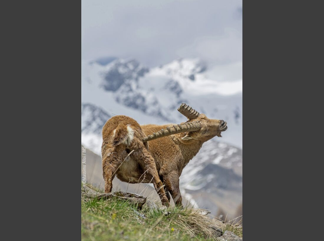 kl-ims-top100-bergbilder-massimo-alloi-cat4-14724874891174-1942 (jpg)
